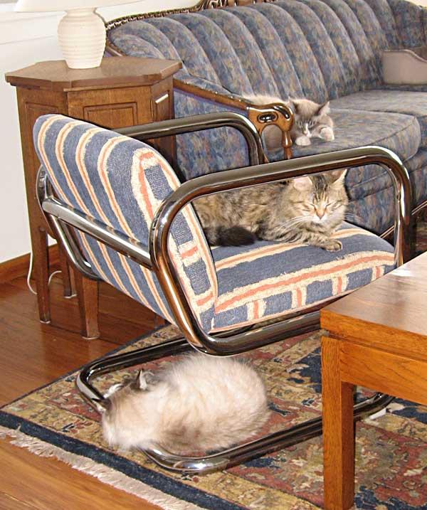 Siberian cats Mari, Calina and Harley