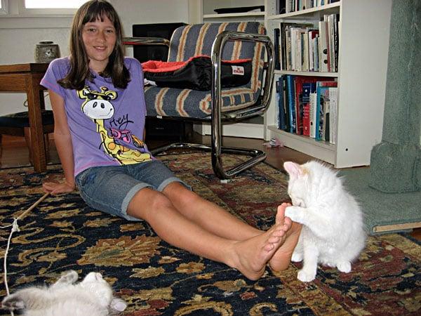 Siberian kitten Baxter