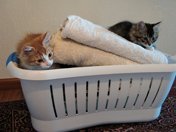 Barney and Biko check on the laundry.