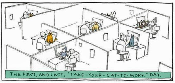 Take-your-cat-to-work day