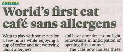 World's first Siberian Cat Cafe