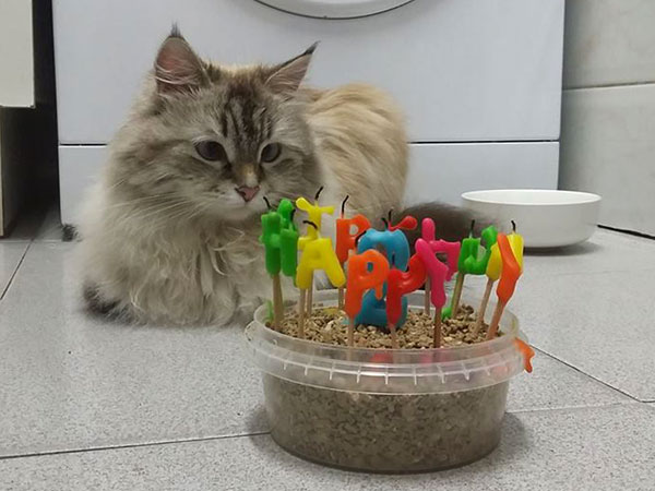 """Beth contemplates her 2nd birthday """"cake"""", 25 Aug 2017"""